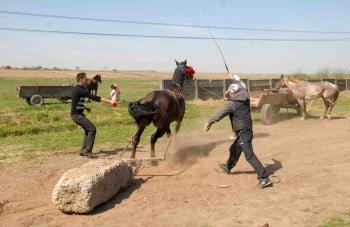Cai maltratați de stăpâni, unul a murit