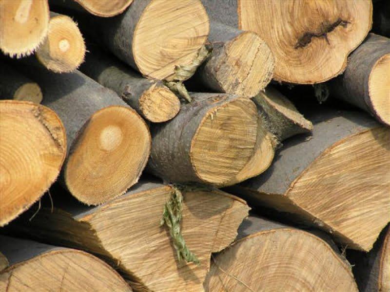 Zeci de percheziții la hoții de lemne
