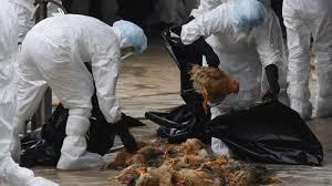 Focare de gripă aviară la graniţă. Doljul sub supraveghere