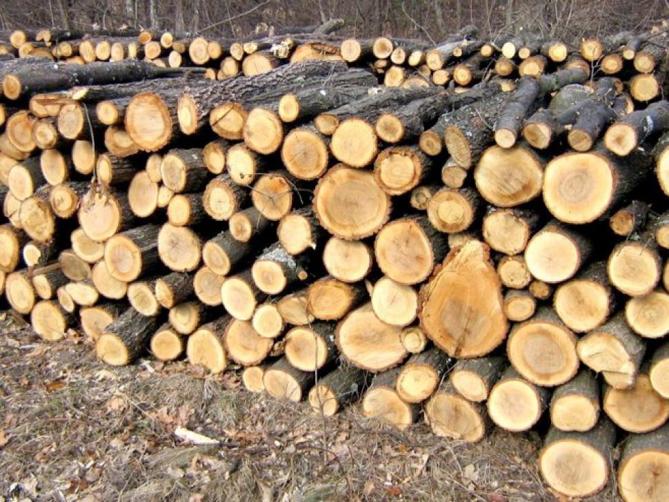 S-au pus pe tăiat și furat material lemnos