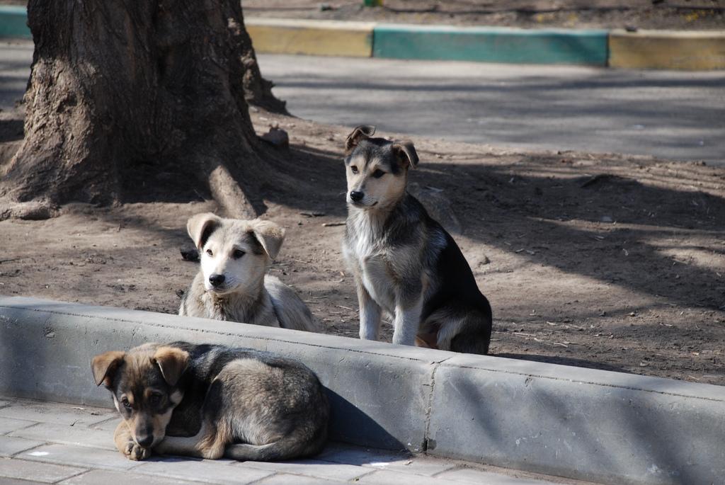 Primăria din Motru donează câinii din oraş