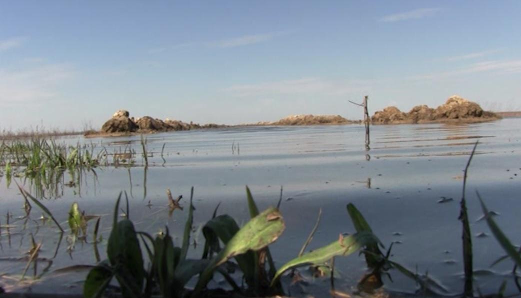 Olt: Dunărea și-a ieșit din matcă. Peste 300 de hectare de pășune și pădure, inundate