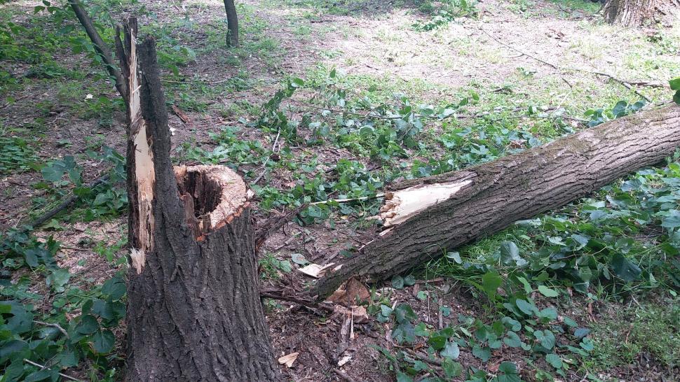 A murit după ce a căzut un copac pe el
