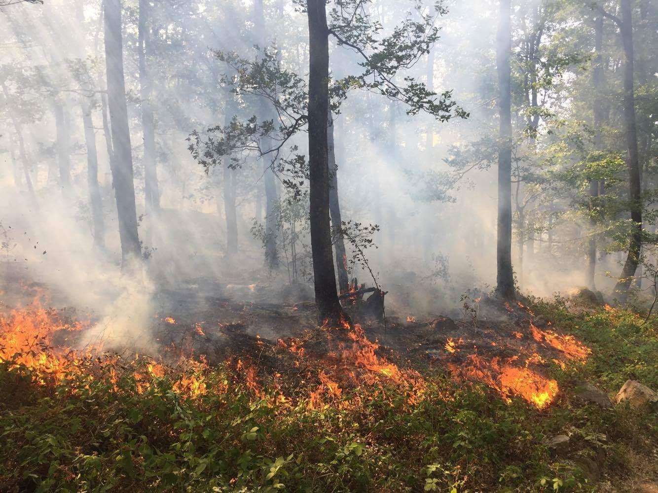 Incendiul din Svinița a afectat 50 de hectare de pădure