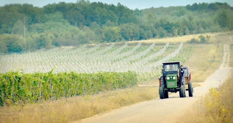 Vinurile de Sâmburești, un brand de țară tot mai apreciat