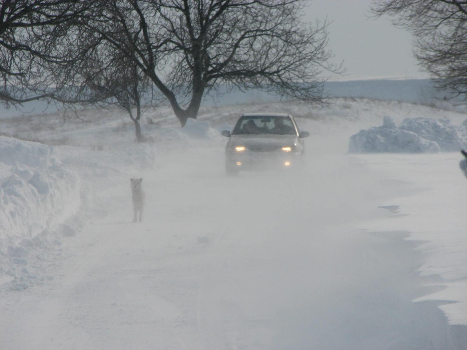 Mehedinți: O autofreză  de zăpadă multifuncțională și o autospecială, aduse  în regim de urgență din alte județe