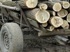Percheziții la hoți de lemne