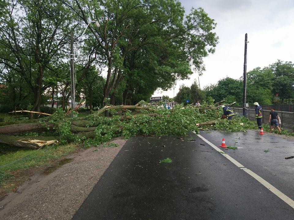 Trafic deviat pe DN 55, după ce un copac a căzut pe carosabil