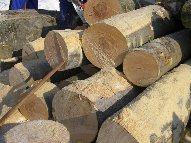 Direcția Silvică Gorj vinde lemne populației
