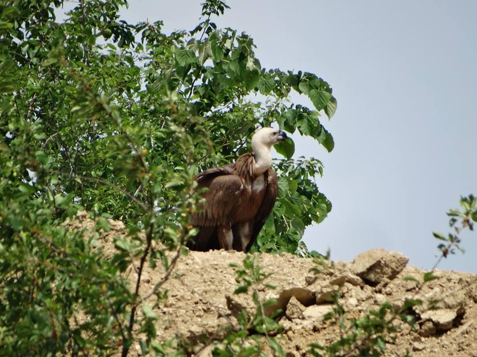 Mehedinți: Pasăre rară văzută în Parcul Natural Porțile de Fier
