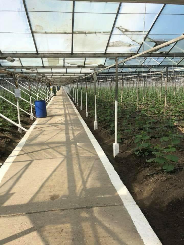 Sclavi pe plantațiile străine, fug de munca în țară