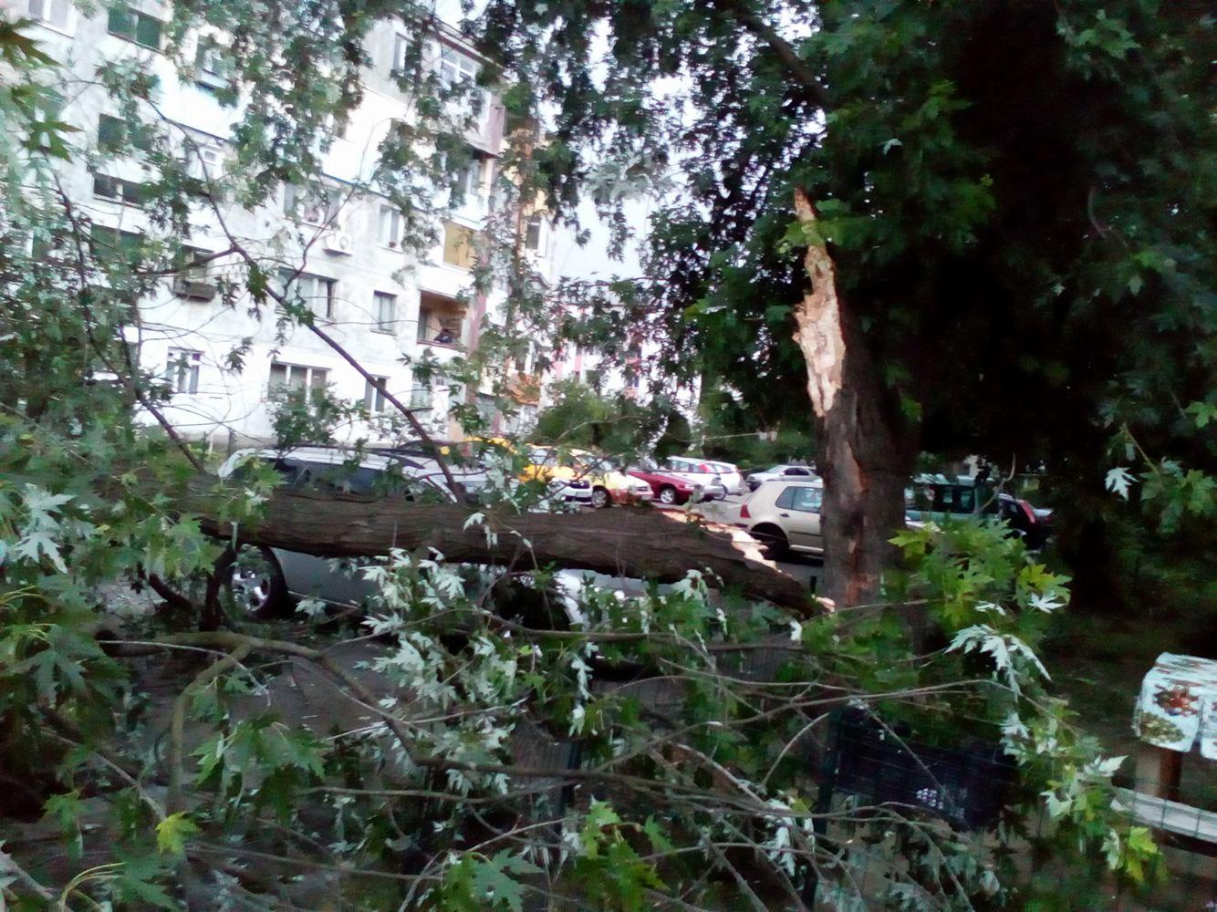 UPDATE: Gospodărie din Malu Mare, inundată/Maşini distruse de copaci, în Craiova