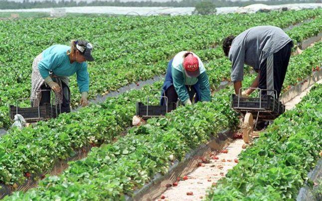 România importă forţă de muncă străină
