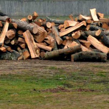 Doi gorjeni au furat lemne de pe terenul unei bătrâne