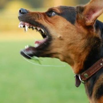 Ce obligaţii au proprietarii câinilor agresivi