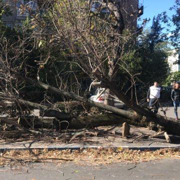 Craiova: Femeie prinsă sub un copac