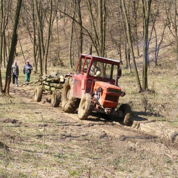 Mehedinți: Pădurice de salcâm din Livezile distrusă de flăcări