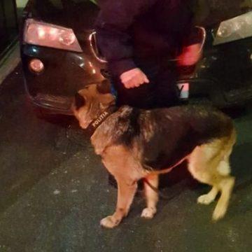 VIDEO-Cocaină la Porţile de Fier I, descoperită cu ajutorul câinelui Nabapa