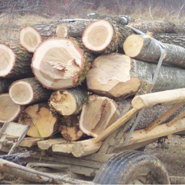Hoţi de lemne, prinşi în flagrant