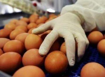 Ouă contaminate cu Fipronil, vândute în magazine din Gorj!