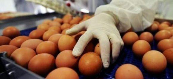 Ouă cu Fipronil, de la o fermă din Olt, în magazine din ţară