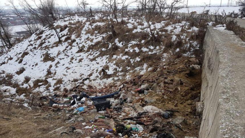 Peisaj de groază la marginea orașului. Cai și măgari, sacrificați pe Dealul Târgului