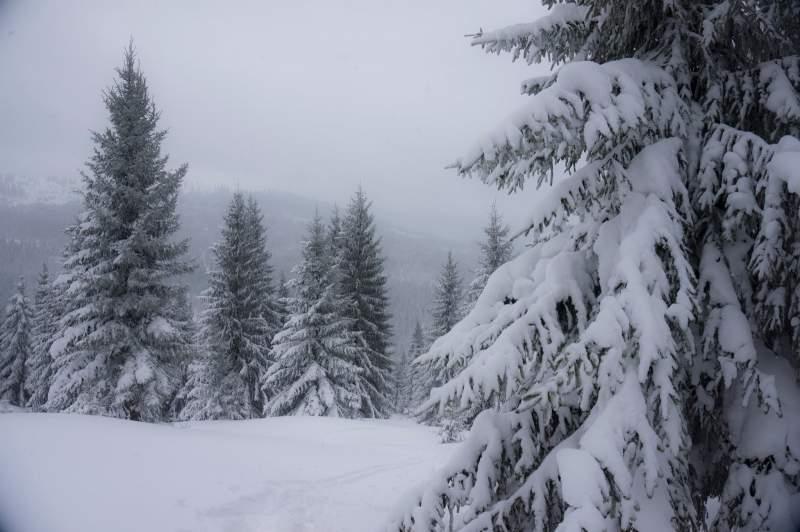 Cod galben de zăpadă şi viscol în mai multe județe