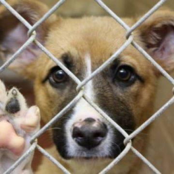 Primăria pierde procesul cu Viaţa Animalelor, dar Adăpostul canin Breasta rămâne deschis