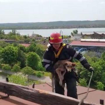 Video/ Căţel salvat de pompierii mehedinţeni