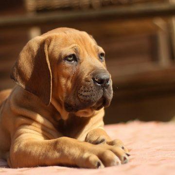 Amenzi de peste 12.000 lei pentru proprietari de câini periculoşi