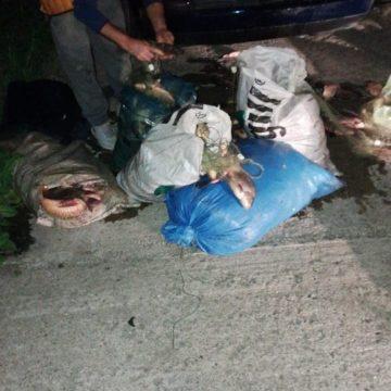 Braconier prins în plasa polițiștilor cu 230 de kg de pește