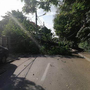 Circulație blocată de un copac rupt