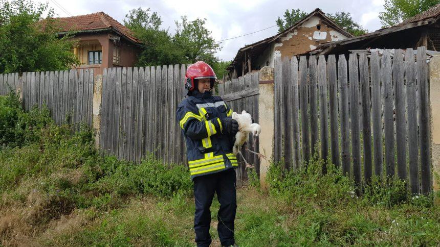 Video/ Pui de barză, salvat de pompieri