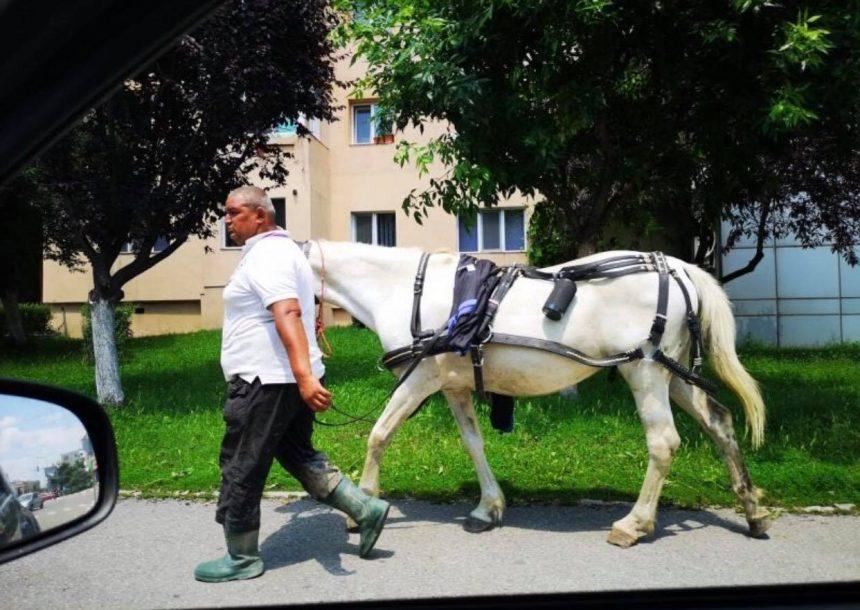 Un gorjean și-a scos calul la plimbare pe străzile din Târgu Jiu