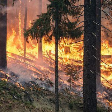 Avertizare MAE pentru Grecia: Risc ridicat de incendii de vegetaţie pentru insula Rhodos