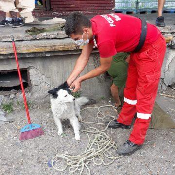 Căței salvați de pompieri