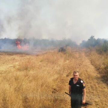 Incendiu la Ciutura, pe zeci de hectare