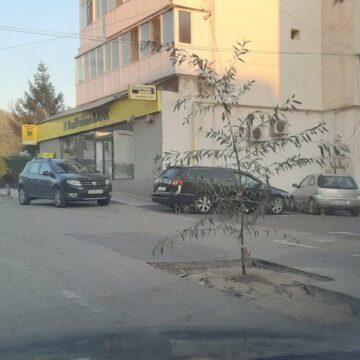 Protest inedit în Gorj: Un şofer a plantat un copac într-o groapă