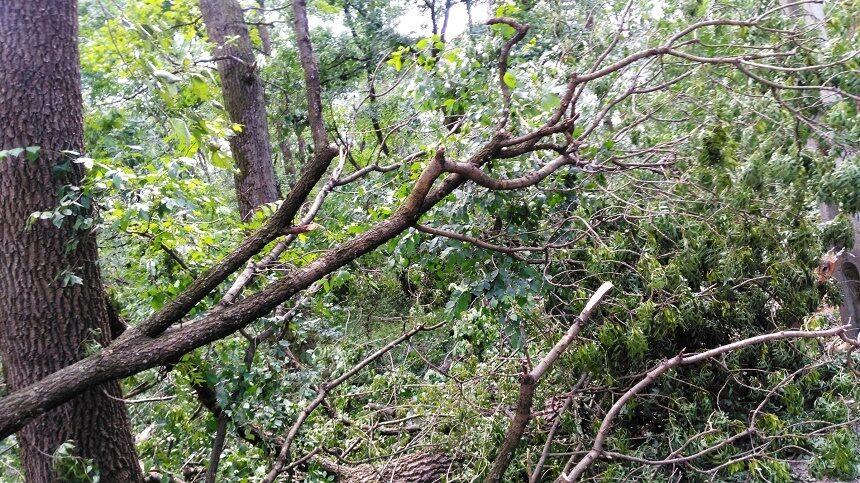 Vâlcea: Trafic blocat total pe DN 7, la Călimăneşti din cauza unor copaci care au căzut pe carosabil