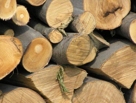 Polițiștii din Tismana au confiscat 6,5 metri cubi de material lemnos