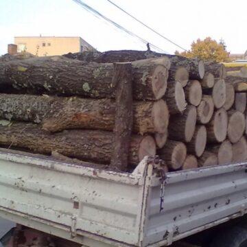 Gorjean în vârstă de 65 de ani, prins la furat de lemne