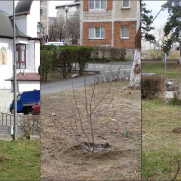 Au început plantările de primăvară în Râmnicu Vâlcea