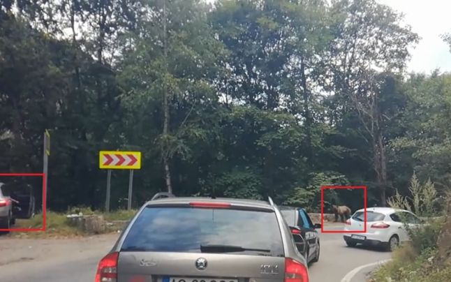 13 turiști, recuperați de jandarmi după ce s-au întâlnit pe traseul Jepii Mari cu o ursoaică cu pui